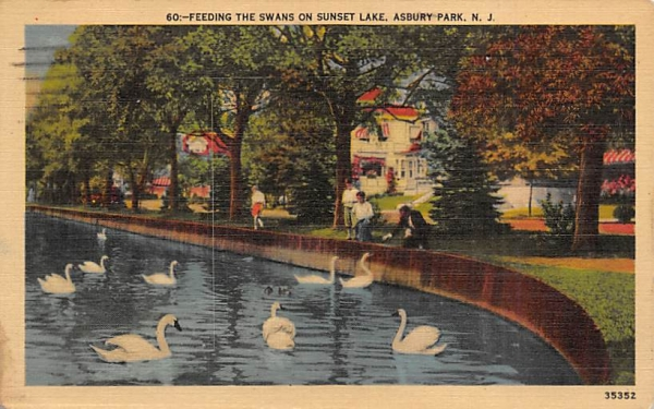 Feeding the Swans on Sunset Lake Asbury Park, New Jersey Postcard