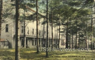 The Pines  - Branchville, New Jersey NJ Postcard