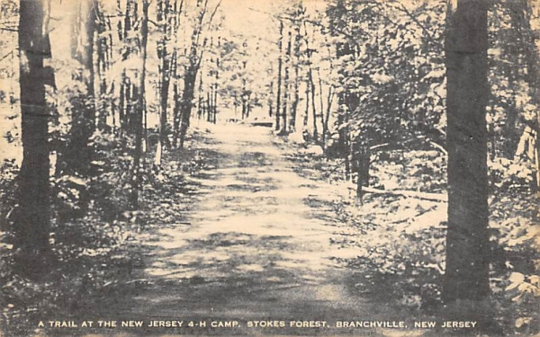 Stokes Forest, a trail at the New Jersey 4-H Camp Postcard