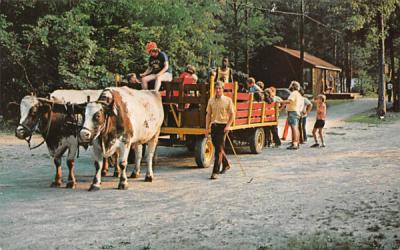 Stokes Forest 4-H Camp Branchville, New Jersey Postcard