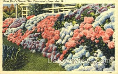 Cape May Flowers  - New Jersey NJ Postcard