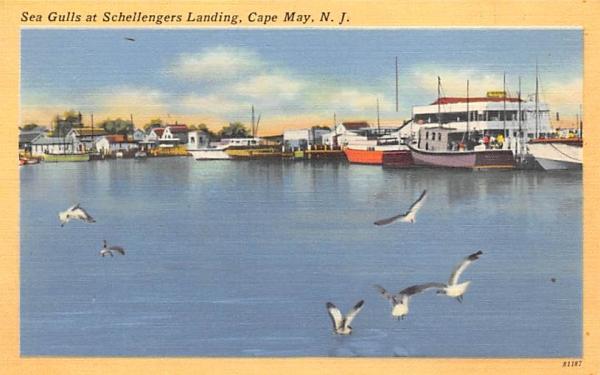 Sea Gulls at Schellengers Landing Cape May, New Jersey Postcard