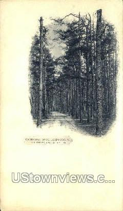 Cathedral Drive - Lakewood, New Jersey NJ Postcard