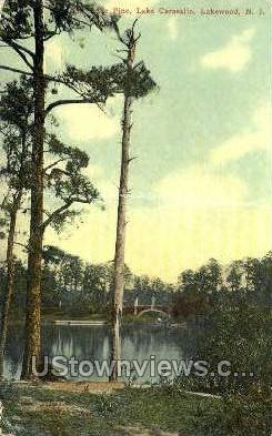 The Cone Pine - Lakewood, New Jersey NJ Postcard