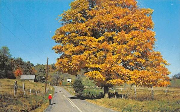 New Jersey-Pennsylvania Autumn afternoon Postcard