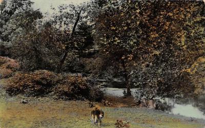 Scene of stream Misc, New Jersey Postcard