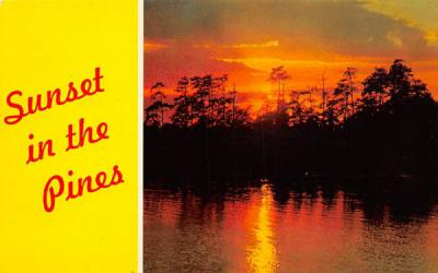 Sunset in the Pines Misc, New Jersey Postcard