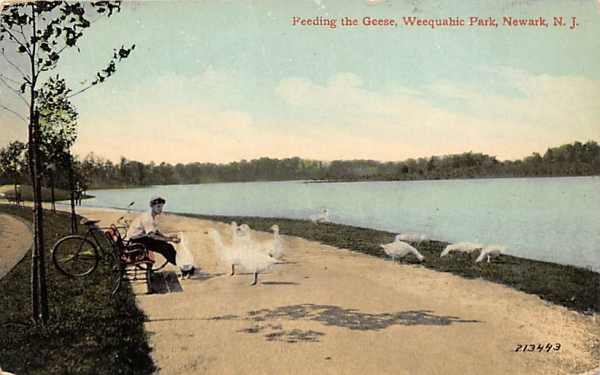 Feeding the Geese, Weequahic Park Newark, New Jersey Postcard