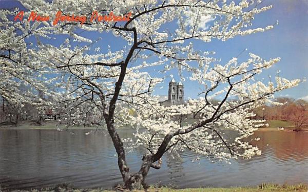 cherry blossoms, Branch Brook Park Newark, New Jersey Postcard