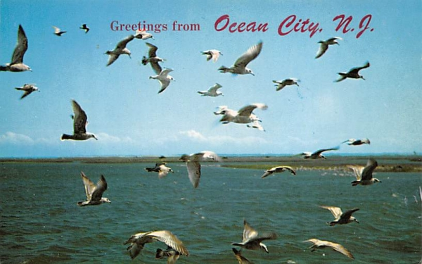 Greetings from Ocean City, N.J., USA New Jersey Postcard