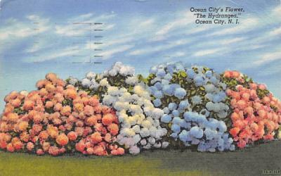 Ocean City's Flower,