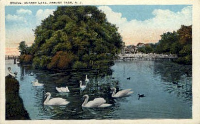 Swans, Sunset Lake - Asbury Park, New Jersey NJ Postcard