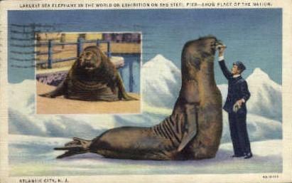 Largest Sea Elephant, Steel Pier - Atlantic City, New Jersey NJ Postcard