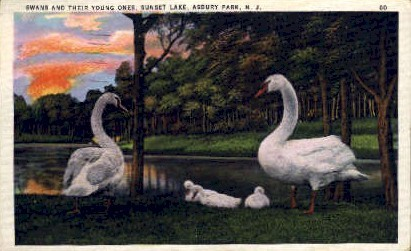 Swans Sunset Lake - Asbury Park, New Jersey NJ Postcard