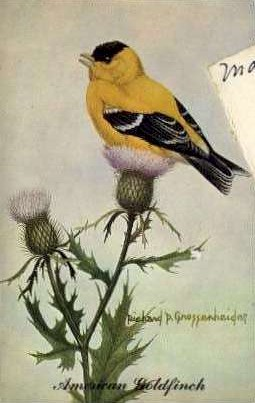 State Bird of New Jersey - Misc Postcard