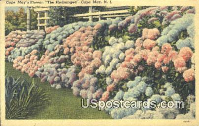 Cape May's Flower - New Jersey NJ Postcard