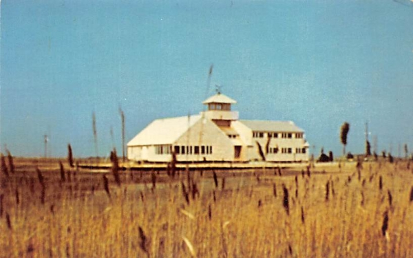 South Jersey Wetlands Institute Stone Harbor, New Jersey Postcard