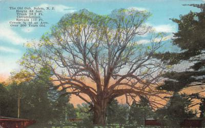 The Old Oak Salem, New Jersey Postcard