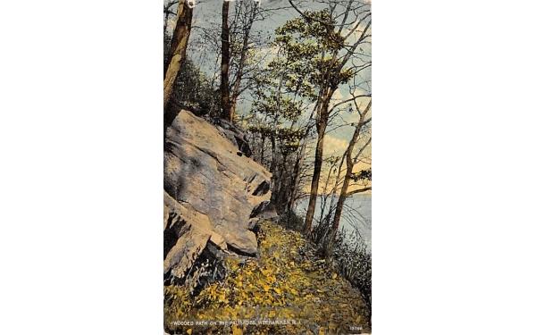 Wooded Path on the Palisades Weehawken, New Jersey Postcard