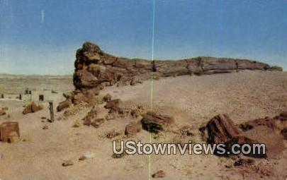 Big Log, Petrified Forest - Misc, New Mexico NM Postcard