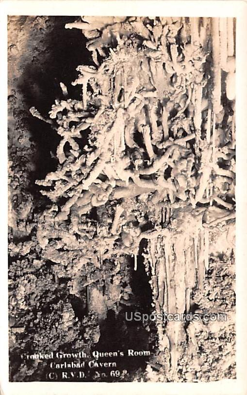 Crooked Growth - Carlsbad Caverns, New Mexico NM Postcard