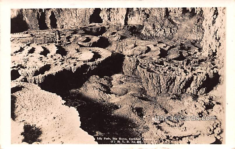Lily Pads - Carlsbad Caverns, New Mexico NM Postcard