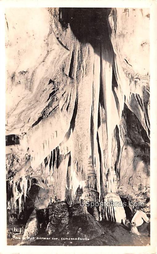 Elephant Ear - Carlsbad Caverns, New Mexico NM Postcard