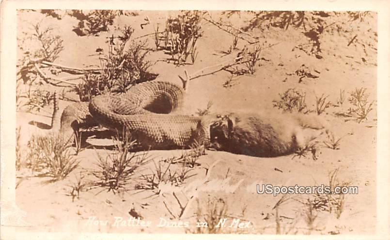 How Rattlers Dine - Misc, New Mexico NM Postcard