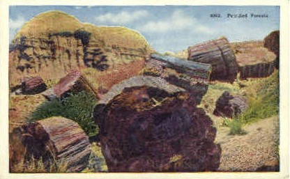 Petrified Forests - Misc, New Mexico NM Postcard