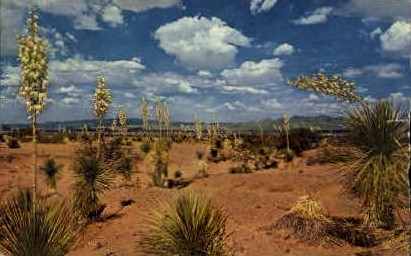 Desert Yucca - Misc, New Mexico NM Postcard