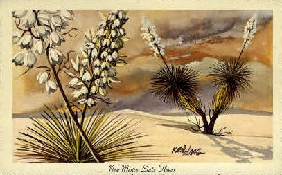 New Mexico State Flower - Misc Postcard