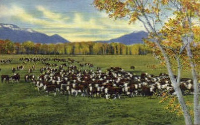 Cattle on the Range - Misc, New Mexico NM Postcard