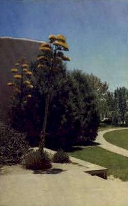 Century Plants of the Desert - Misc, New Mexico NM Postcard