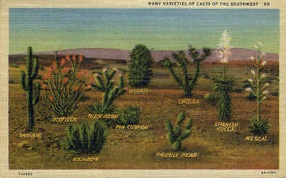 Many Varieties of Cacti - Misc, New Mexico NM Postcard