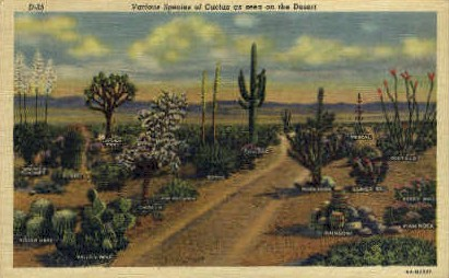 Various Species of Cactus - Misc, New Mexico NM Postcard