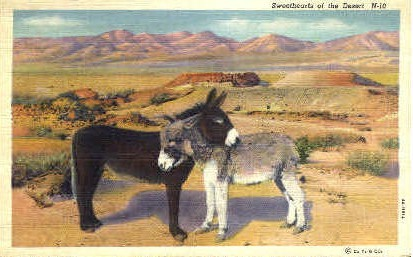 Sweethearts of the Desert - Misc, New Mexico NM Postcard