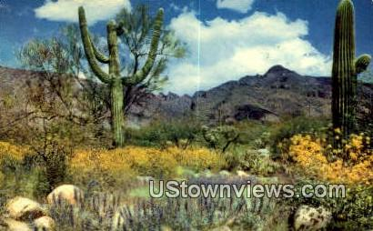 Misc, New Mexico     ;     Misc, NM Postcard