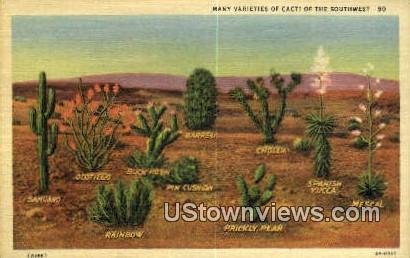 Cacti - Misc, New Mexico NM Postcard