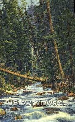 Mountain Stream - Misc, New Mexico NM Postcard