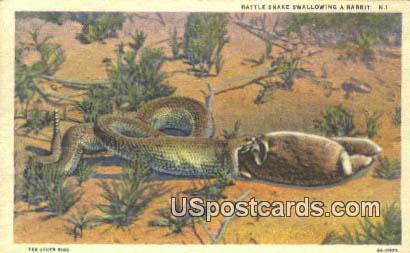 Rattle Snake - Misc, New Mexico NM Postcard