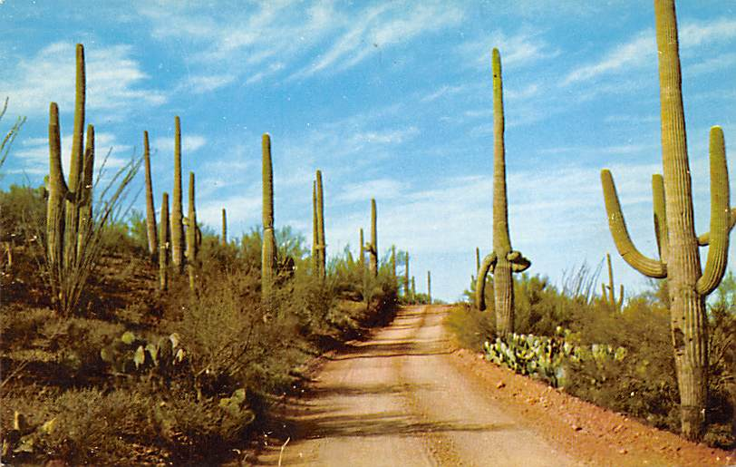 Southwestern New Mexico NM