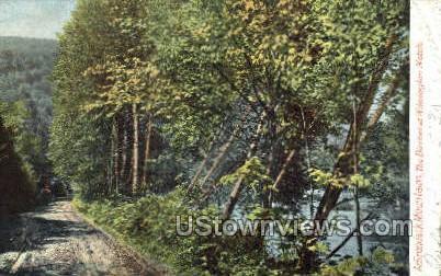 Birches at Wilmington Notch - Adirondack Mts, New York NY Postcard