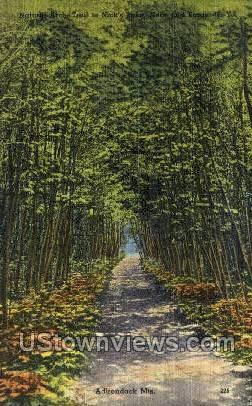Natural Arch Trail - Adirondack Mts, New York NY Postcard