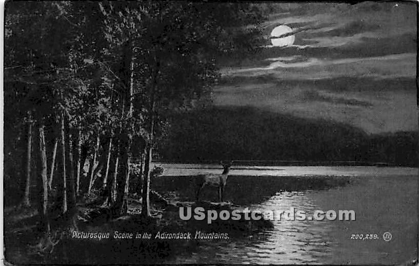 Adirondack Mts, New York NY Postcard