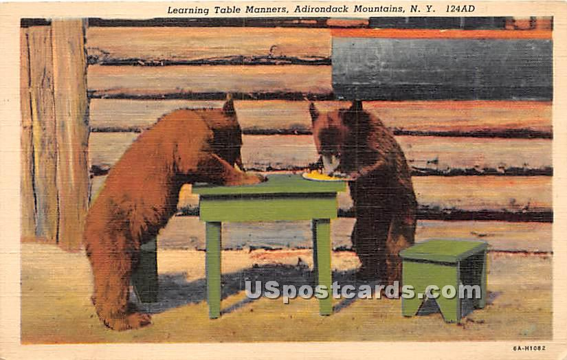 Learning Table Manners, Bears - Adirondack Mts, New York NY Postcard