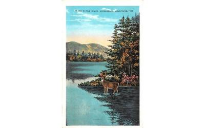 In his native wilds Adirondack Mountains, New York Postcard