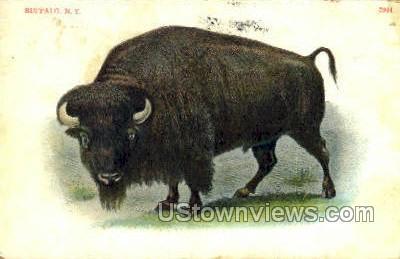 Buffalo - New York NY Postcard