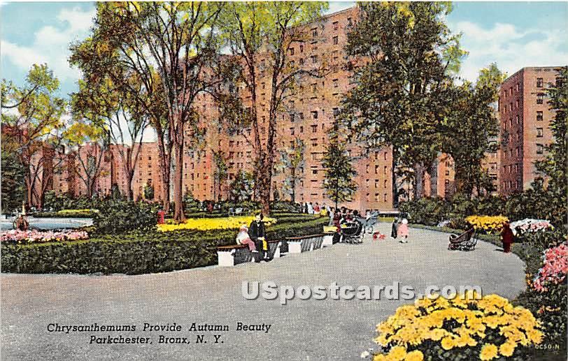Chrysanthemums, Parkchester - Bronx, New York NY Postcard