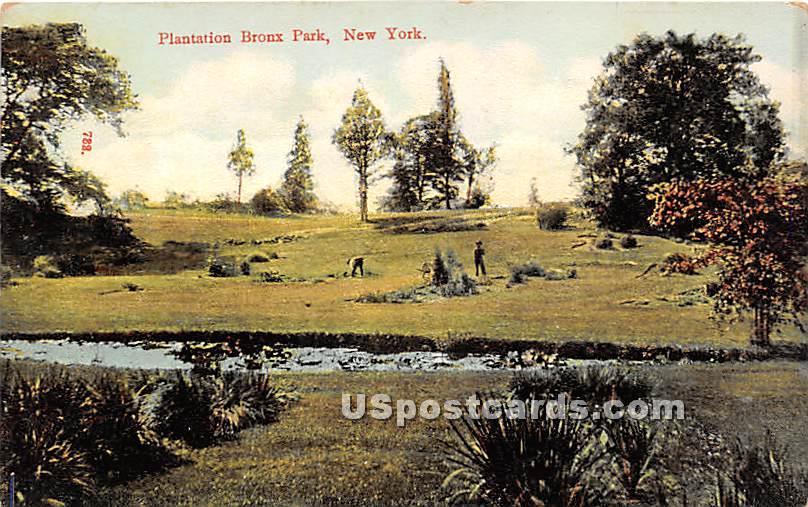 Plantation - Bronx Park, New York NY Postcard
