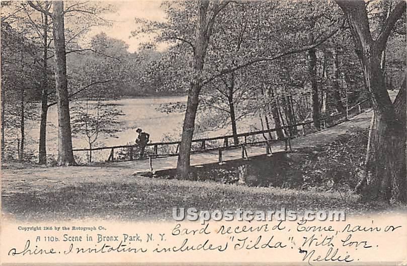 Bronx Park, New York NY Postcard